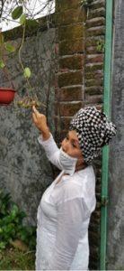 Hervia Latuconsina Budi, mencintai hoya sejak bertemu di Belanda Foto: Maria Karsia